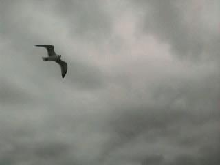 γλάρος - ουρανός